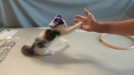 Mrs. Dillon Cat Trick High Five In Hat 2013-08-31