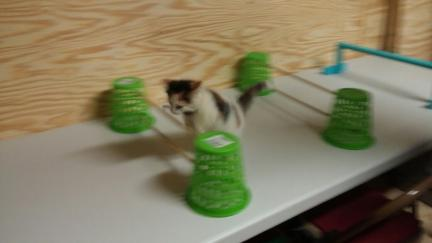 Cat Agility Jumps & Tunnel Mrs. Dillon 2016-09-09